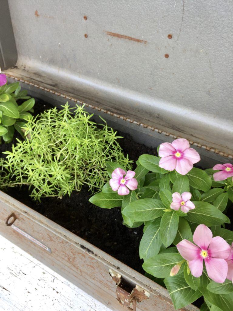 DIY farmhouse style planter using a rusty craftsman toolbox