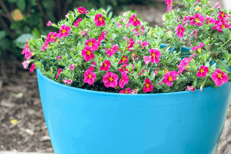 Outdoor Pot Painting Ideas – How To Save Money On Planters