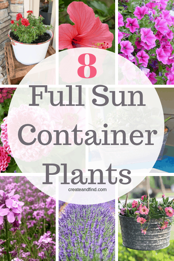 Full Sun Container Plants - Beautiful plants for containers that love full sun. Add these varieties of plants and flowers to your hanging baskets, window boxes, and containers in sunny areas and enjoy blooms all summer #fullsunplants #containergardening #flowers #plants #gardening #flowergardening width=
