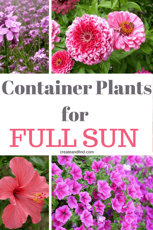 8 Sun Loving Plants for Containers - Plant these in your hanging baskets or garden in those areas that get full sun #createandfind #gardening #sunlovingplants #plants #flowers