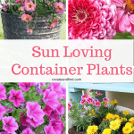 Container Plants for Full Sun Areas