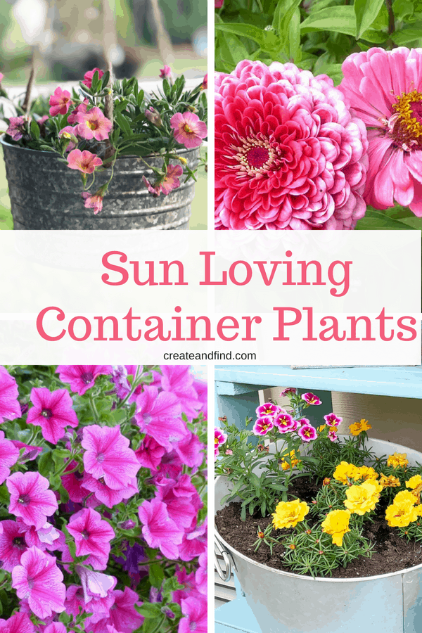 Container Plants for Full Sun Areas - Use these beautiful flowers in those areas that get lots of light #createandfind #gardening #flowers #sunlovingplants