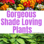Gorgeous plants that love shade