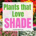 Gorgeous perennial and annual plants that love shade