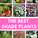 The best plants to grow in shade. Plant these amazing flowers and plants in the shady areas of your yard or garden this year #createandfind #shadeplants #plantsthatgrowinshade