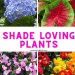 plants that love shade