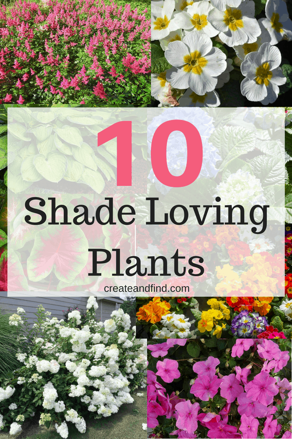 10 plants that love the shade - what to plant for the shady areas in your yard that will give you beautiful color and flowers