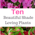 10 beautiful plants that grow in shade