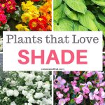10 plants that grow in shade