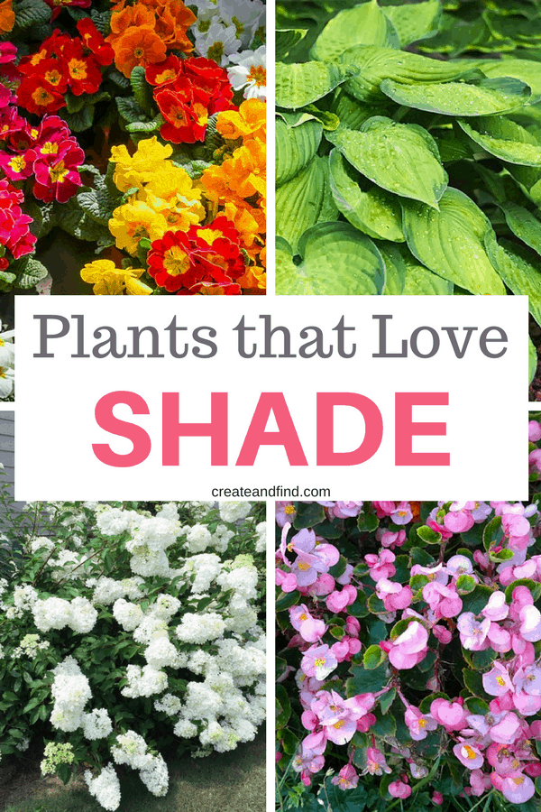 What to plant in the shady areas of your yard or garden - 10 plants that love shade