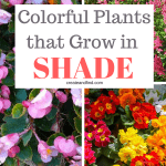 10 colorful plants that grow in shade