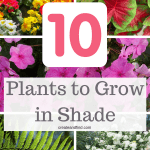 10 plants to grow in shade