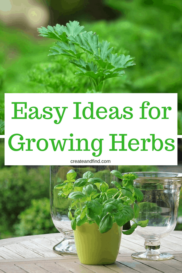 Growing Herbs - What you need to know about 9 popular herbs to grow at home