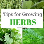 Growing Herbs - Tips and tricks to get started with an at home herb garden!