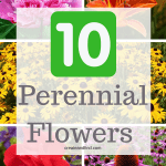 10 Amazing Perennial Flowers to Grow