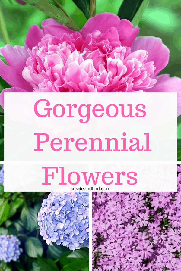 10 Amazing Perennial Flowers you should plant!