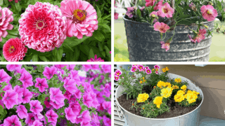 Container Plants for Full Sun