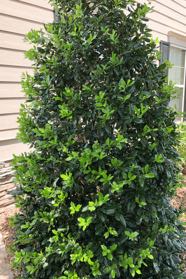 Fast growing privacy trees - Holly