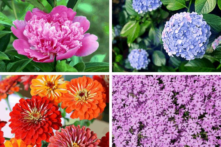 Gorgeous Perennial Flowers