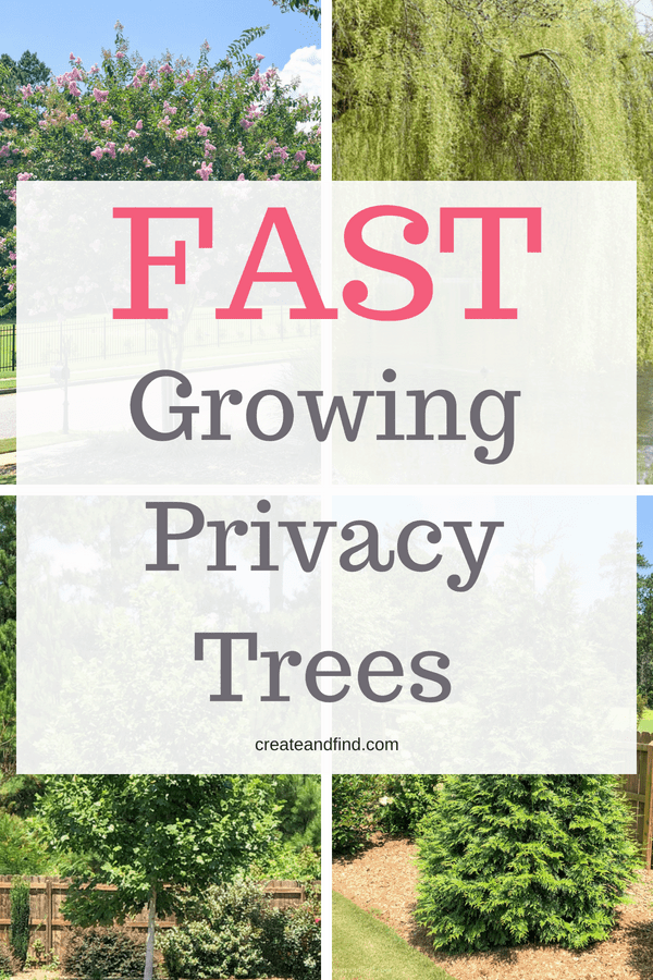 Fast Growing Privacy Trees - Trees you can plant now and have shade and privacy in no time!