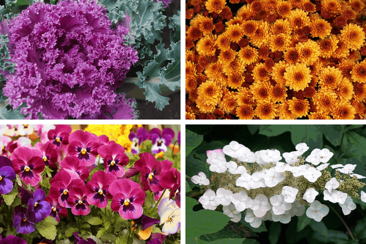 Fall Flowers to Plant For Gorgeous Seasonal Color