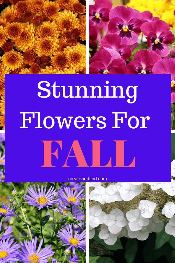 Flowers to Plant In Fall - A variety of color and sizes to add some gorgeous plants to your fall landscaping. #createandfind #fallflowerstoplant #fallflowers #flowers #fallgardens #fallyard