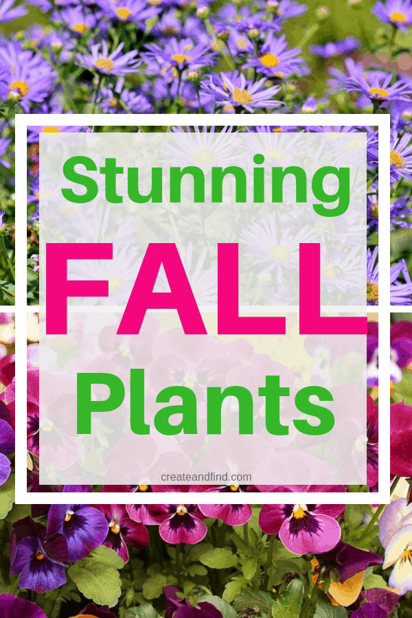Stunning fall plants to add color and variety to your landscape and garden #createandfind #fallplants #gardening
