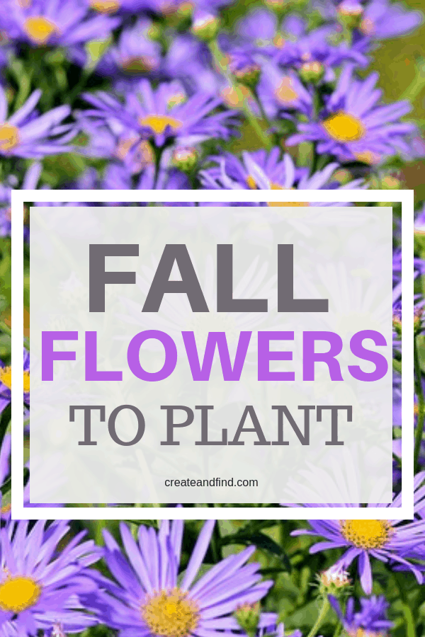 Flowers and plants to add to the garden or yard this fall #createandfind #gardening #fallflowerstoplant #fallplants