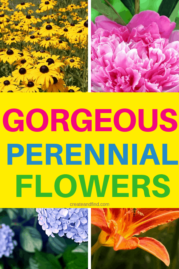 Gorgeous perennial flowers to plant for color and variety year after year #createandfind #perennialflowers #gardening #flowers