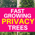 Fast growing privacy trees to plant #createandfind #privacytrees #gardening #trees