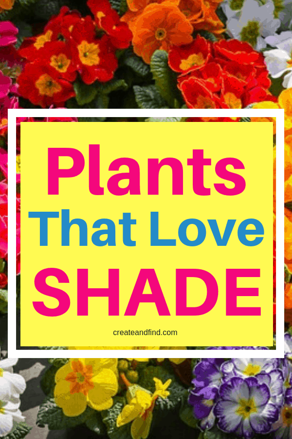 Flowers and plants that love shade! Add these to your garden or landscape for beautiful variety in shady areas #createandfind #plantsthatloveshade #shadeplants #gardening