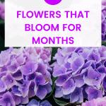 long blooming flowers