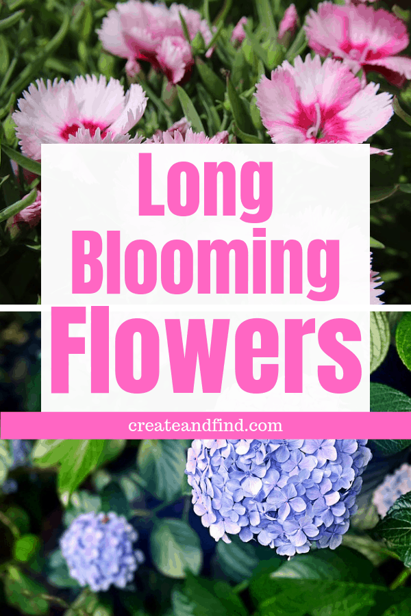 Long Blooming Flowers - add color to your landscape all season with these incredible plant varieties! #createandfind #gardening #flowers #longbloomingflowers
