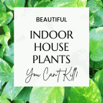 indoor plants you can't kill