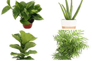 Amazing Indoor Plants You Can't Kill