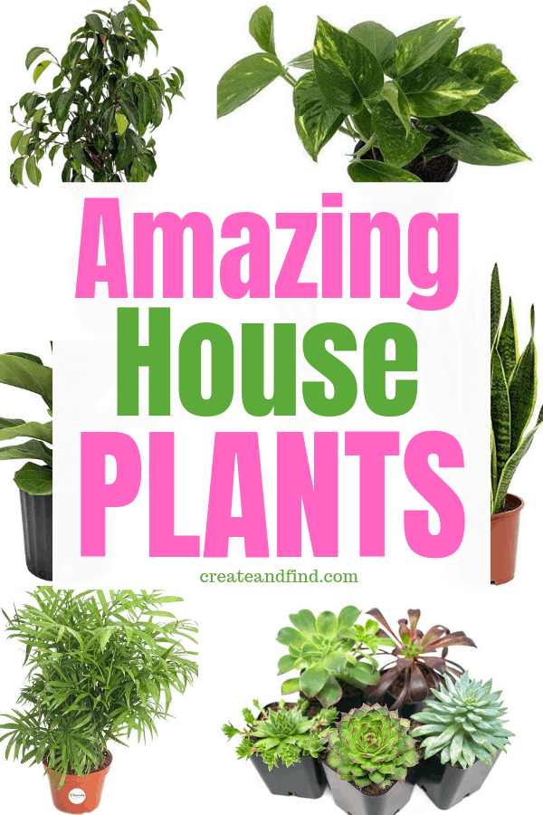 Amazing Indoor Plants to add to your home. Clean your air, add for decor, and enjoy! #createandfind #gardening #houseplants #indoorplants