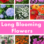 Long Blooming Flowers You'll Love - Add these plants to your landscaping this year for months of blooms! #createandfind #longbloomingflowers #gardening