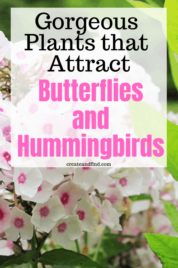 Plants to attract butterflies and hummingbirds
