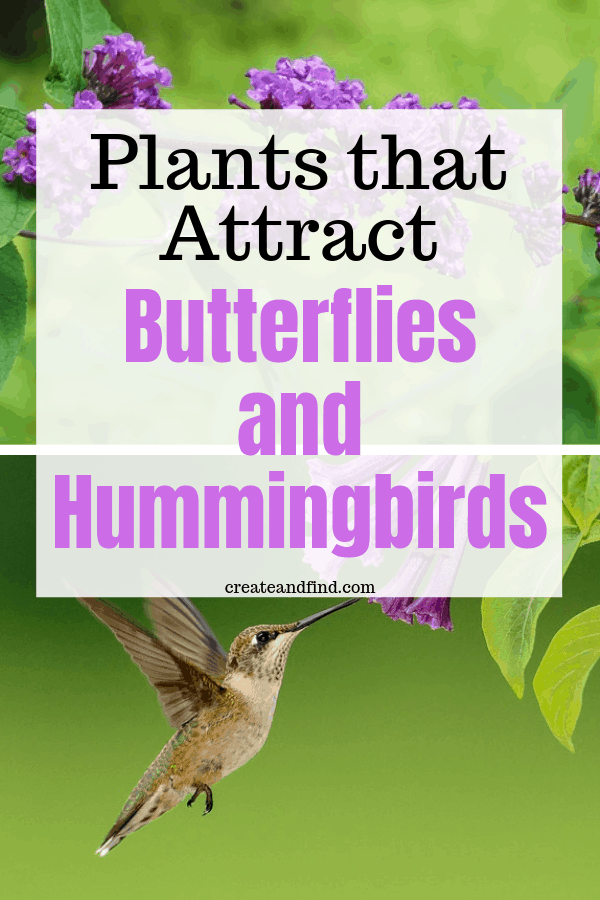 Plants and Flowers to attract hummingbirds and butterflies to your garden this year