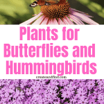 Amazing varieties of plants that attract butterflies and hummingbirds to your garden or landscaping #gardening #flowers