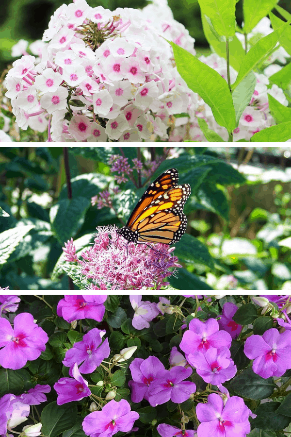 Gorgeous plants and flowers to attract hummingbirds and butterflies to your yard #gardening #flowers
