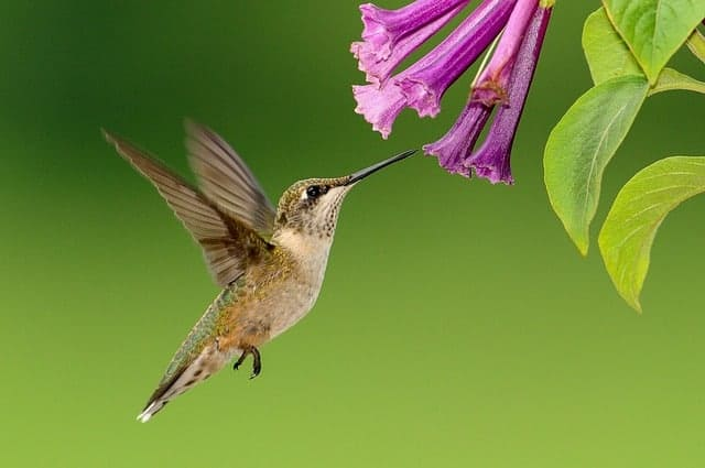 Plants that attract hummingbirds and butterflies.  #plants #gardening #flowers