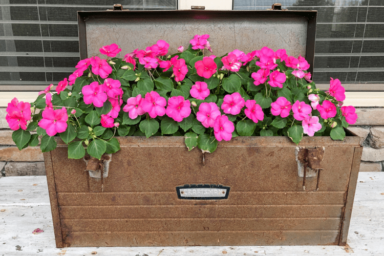 Garden Projects - repurposed toolbox into a planter