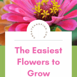 The easiest flowers to grow