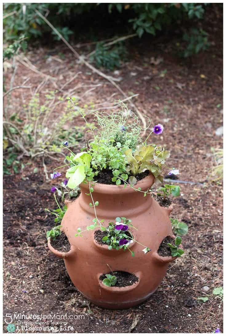 How To Make An Edible Miniature Garden - DIY Mother's Day Gift Idea