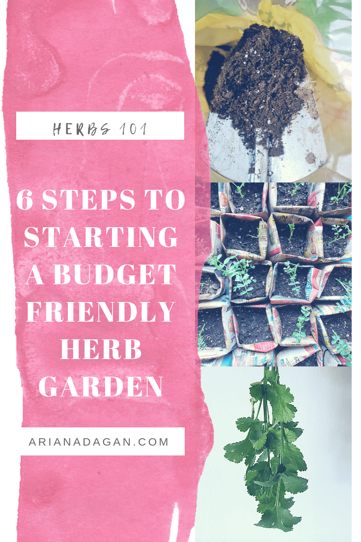 Herbs 101: Starting a Budget Friendly Herb Garden in 6 Affordable Steps!