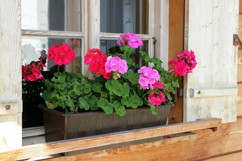 garden project ideas - window boxes