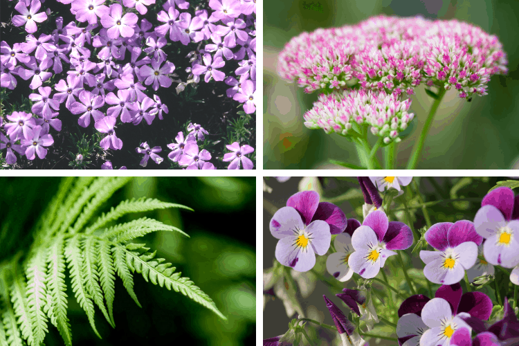 Stress-Free Low Maintenance Perennials You'll Love