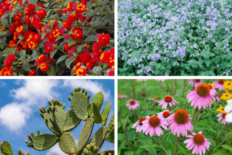 List of Drought Tolerant Perennials for a Stellar Yard