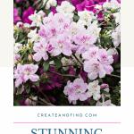 Flowering Shrubs - Azalea Pin